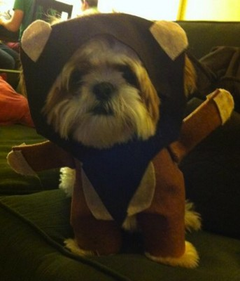 PBF blog ewok dog