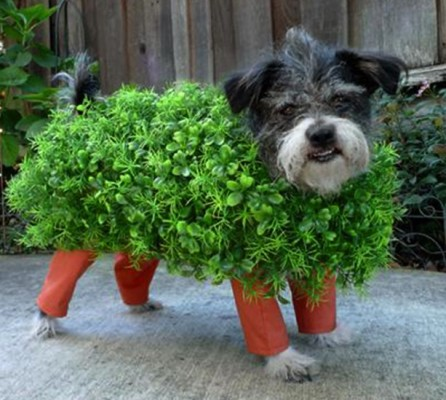 PBF blog planter dog